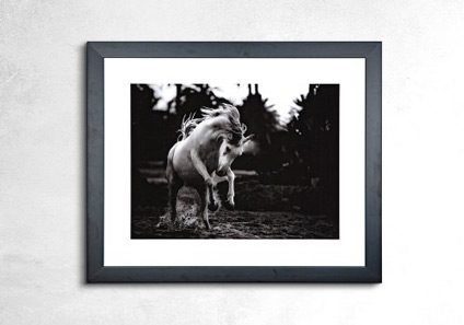 retail_framing_horse